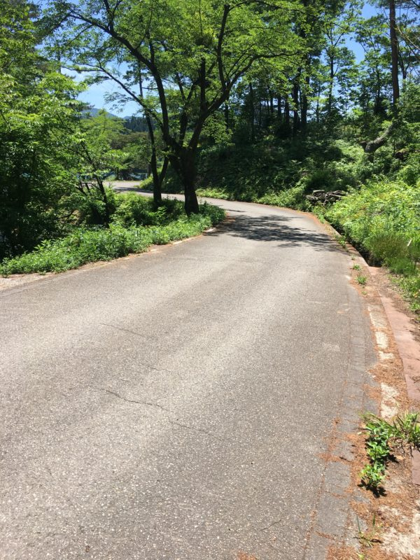 桜ヶ池道路風景